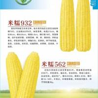 米甜糯868玉米诚招代理商