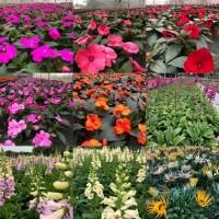 求花卉苗木供货商